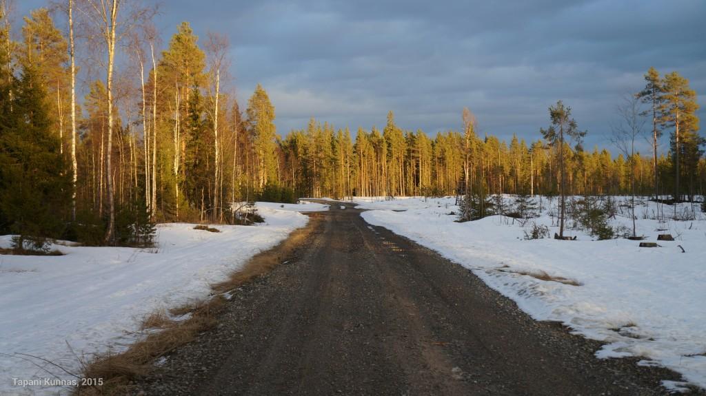 Matalalta paistava aurinko värjää metsän oranssiksi.