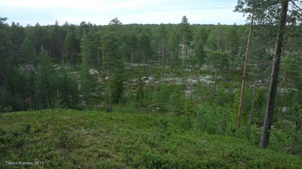 Hyypänmäen pohjoispuolella on lupaavan näköistä maastoa. Tuolta lähden etsimään leiripaikkaa.