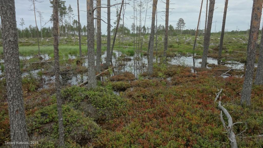 Märkä paikka metsässä, jonka piti kartan mukaan olla kuivaa kangasmetsää.