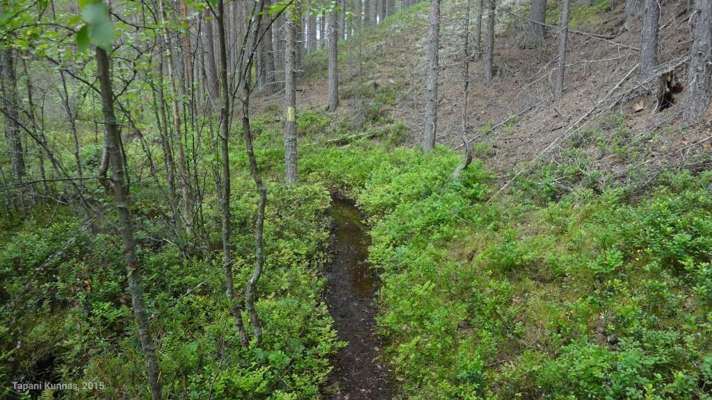 Sunijärvien pohjoispuolella menevä polku on paikoin märkä, mutta kiertotie löytyy läheltä.
