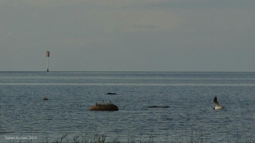 Näkyvyys merelle on hyvä. Tämäkin merimerkki on usean kilometrin päässä rannasta.