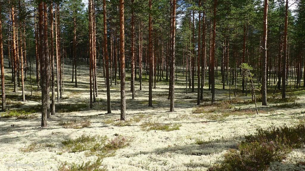 Lauantaiaamuna matka jatkuu aurinkoisessa metsässä.