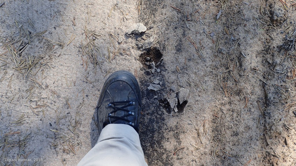 Hirvipiltin jalanjälki.