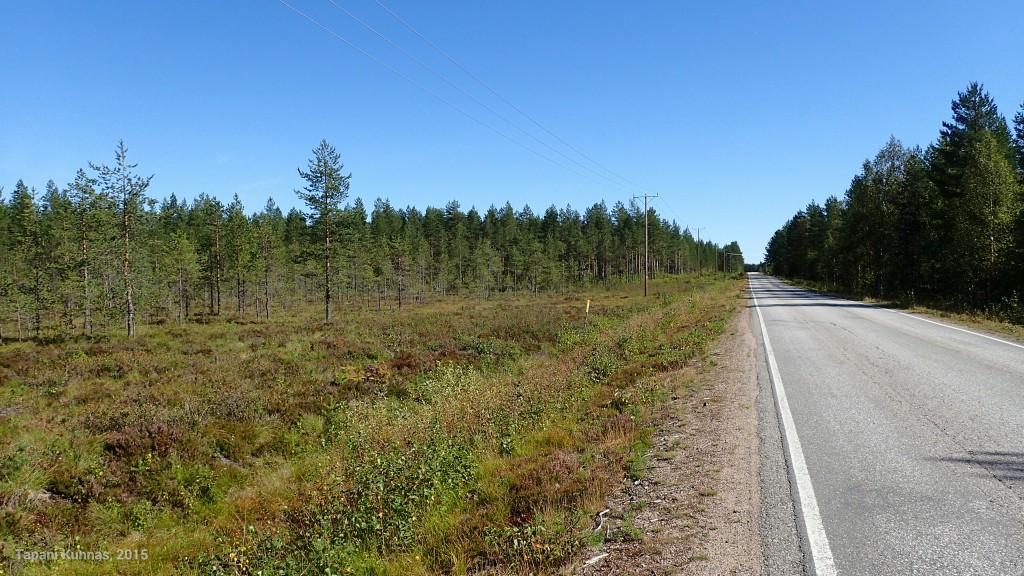 Kouluesimerkki kainuulaisesta maantienäkymästä. Asfalttia, sähkölinja, hiukan suota ja metsä.