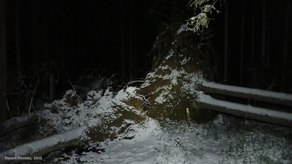 Tie poikki. Neljä puuta on kaatunut samasta paikasta ja polku menee tuosta oikeanpuoleisten puiden alta.