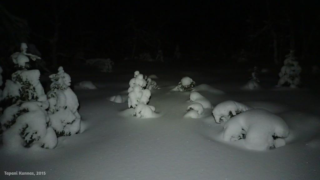 Pimeässä ja lumisessa metsässä on kaunista.