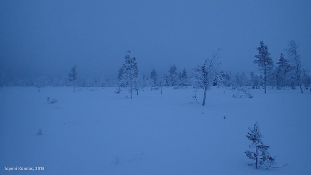 Harvassa tunturikoivikossa on helppo kulkea, vaikka alempana lumi onkin taas sitä pehmeää puuteria.