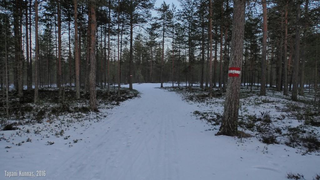 Kaksisenttisen lumen peittämä metsätie, jossa talvella kulkee 10 km latu.