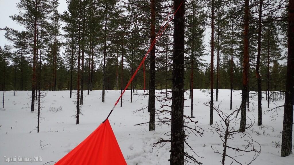 Tarpin korkein kohta on ripustettu puuhun.