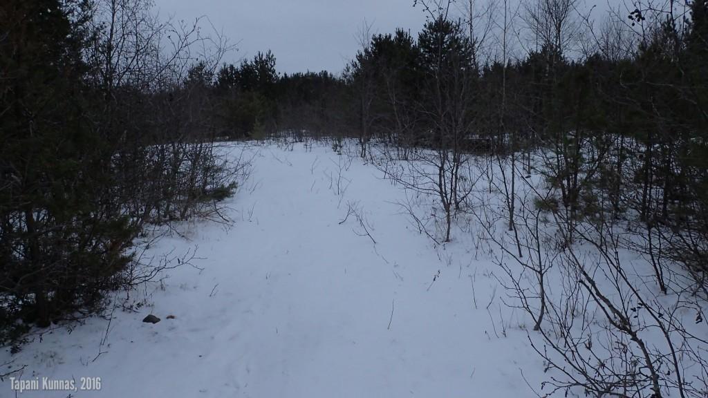 Lumipeitteinen polku.