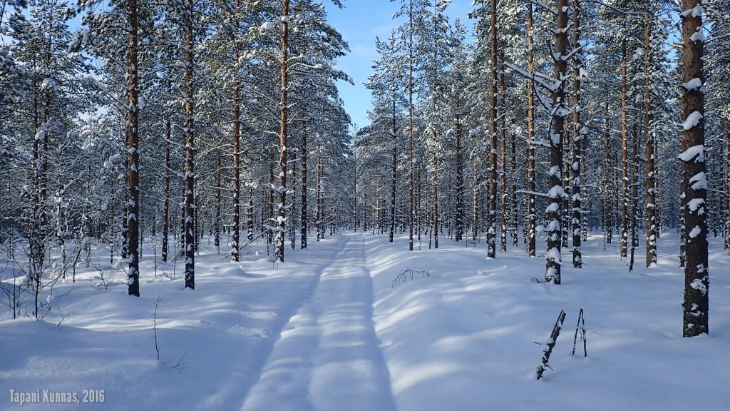 Alkumatka lumen peittämää ajopolkua pitkin.