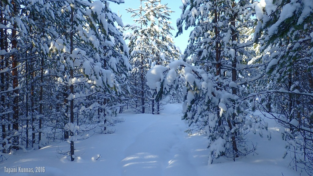 Lumisen metsän kauneutta.