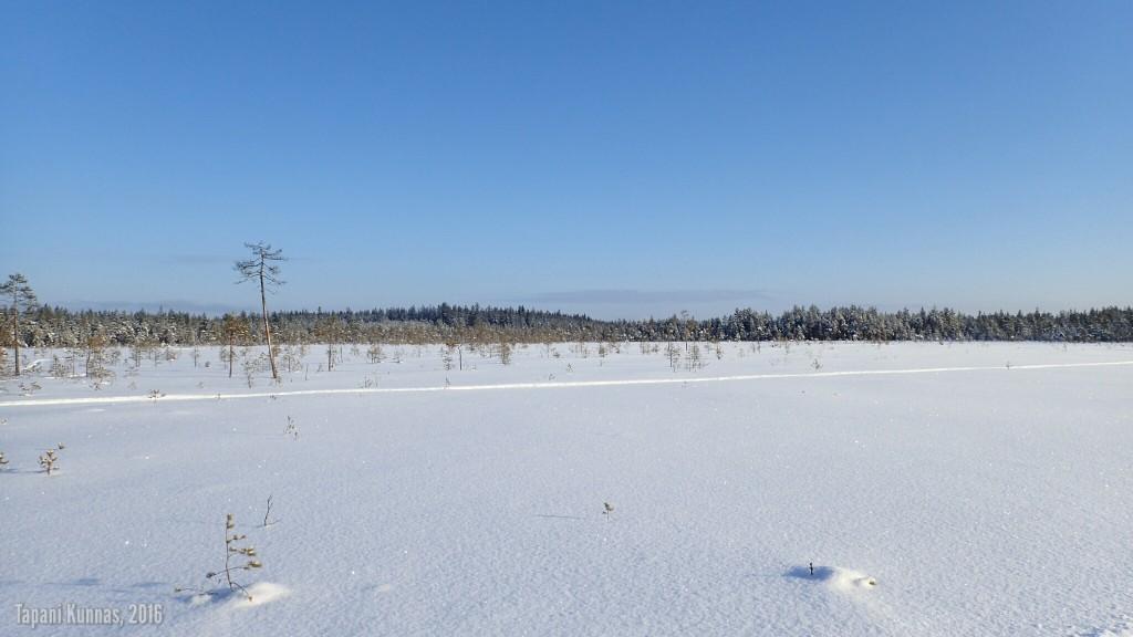Lähes koskematonta lumihankea. Vain yksi moottorikelkanjälki.