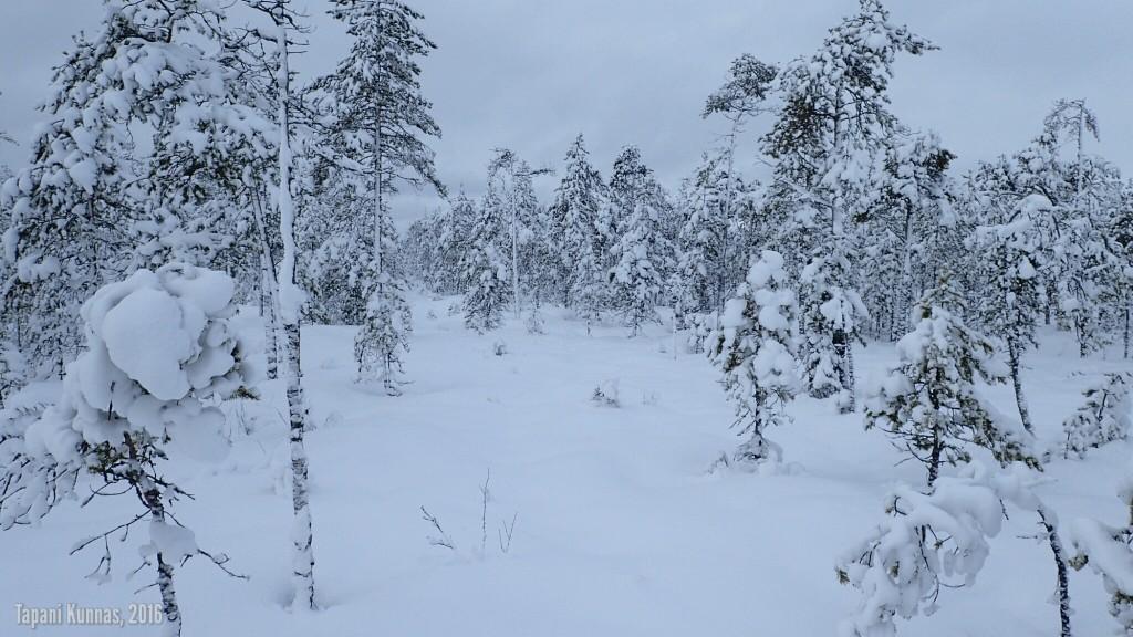 Tässä vaiheessa retkeä metsä on harvaa ja siinäkin hiihtäminen helppoa.