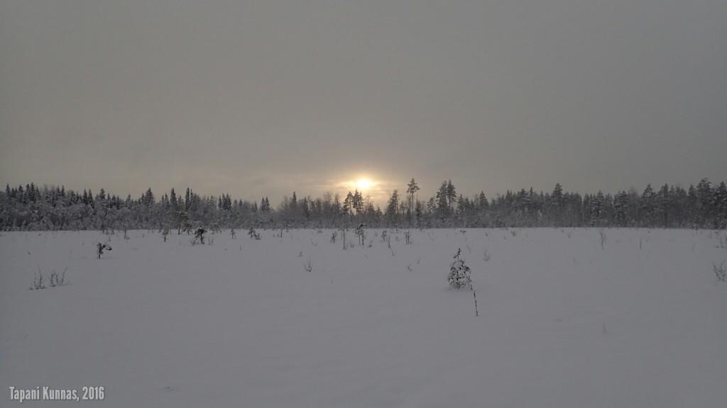 Iltapäivän aurinko Nurmeslehdossa.