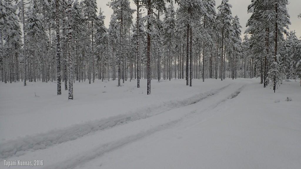 Tieura metsän keskellä.