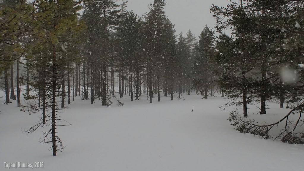 Toisen retkipäivän viimeistä valoisaa tuntia kultivoi lumipyry.