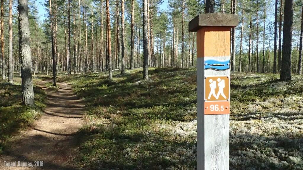 Tervareitistön polut on merkitty tällaisilla oranssipäisillä paaluilla. Paalussa oleva luku on jäljellä oleva matka polun päätepisteeseen (tästä on Rokualle 96,5 kilometriä).