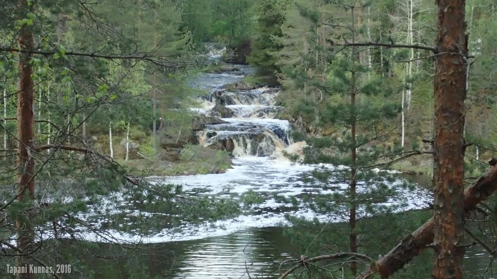 Oisavanjoki laskee Oulujokeen näin komean kosken kautta.