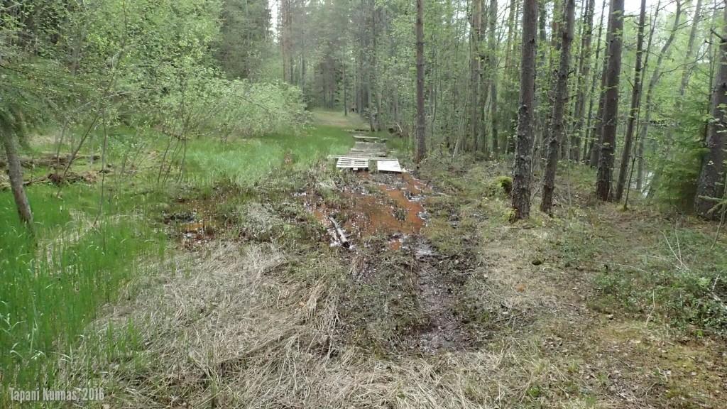 Myös Oulujokivarressa oleva polku on paikoin hyvin märkä.