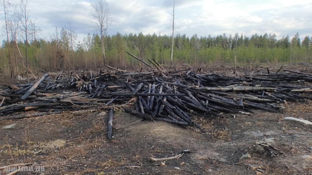 Palanutta (tai poltettua) puutavaraa.