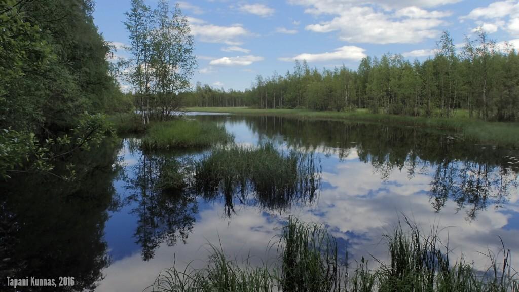 Kanavan alkuosaa. Kuvan taustalla näkyvien puiden takana on Oulujärvi.