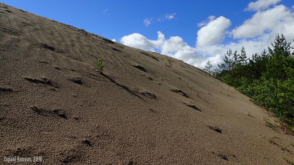Lähikuva hiekkakasasta.