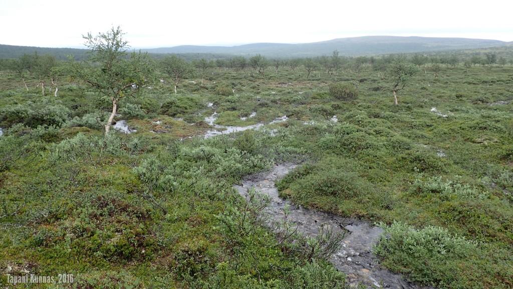 Märkä maasto jatkuu myös Snoikanjohkan länsipuolella.