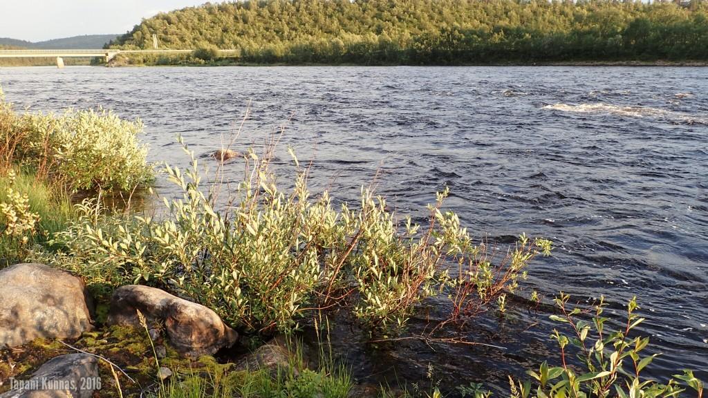 Myös joessa on paljon vettä.