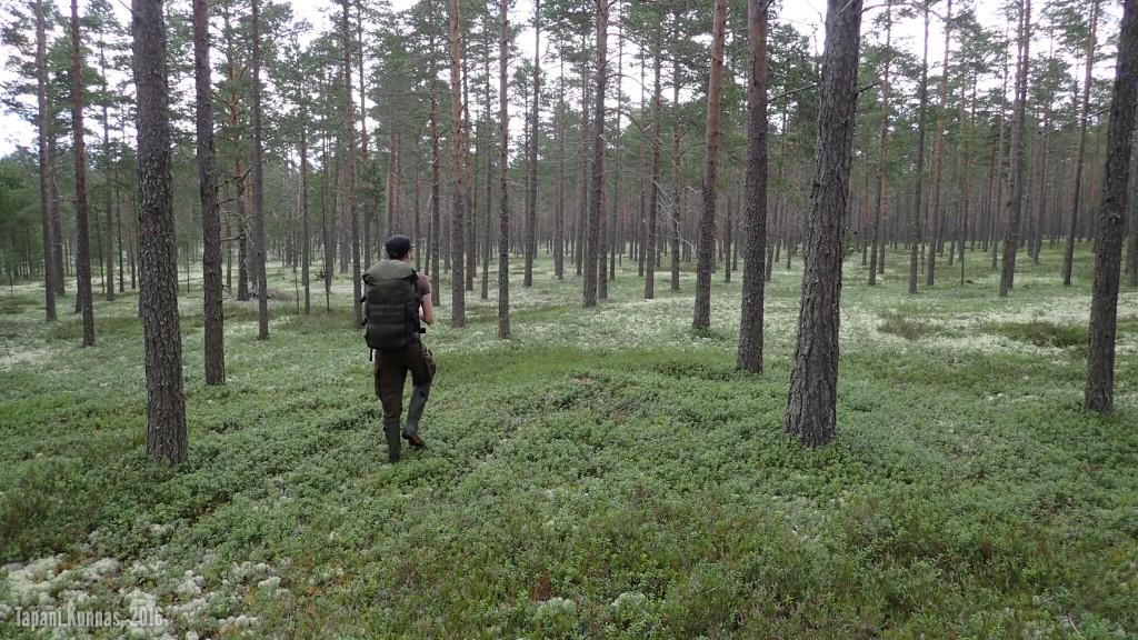Hyypänmäkeä lähestyessämme poistumme välillä polulta. Näin helppokulkuisessa metsässä ei toki polkuja tarvitakaan.