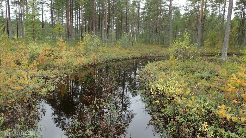 Märkä kohta ajopolulla. Tämän pystyi kuitenkin helposti kiertämään kuivahkon metsän kautta.