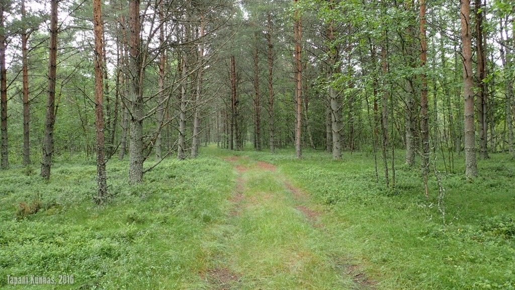 Kohti uutta yritystä. Ajopolku menee kivannäköisessä metsässä.