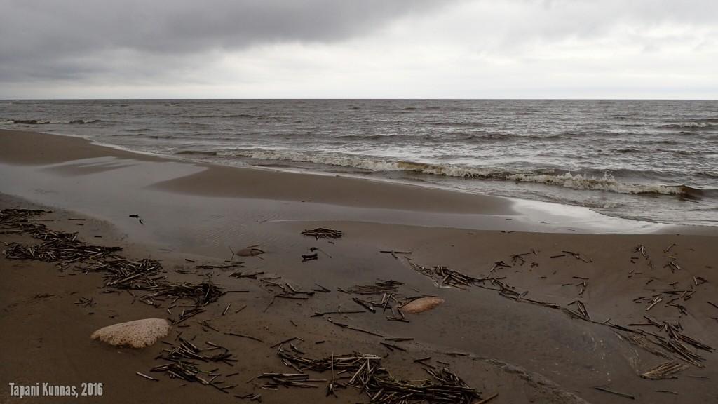 Nousuveden jäljiltä rantaan jää paljon pienoiskluuveja, jotka siitä vähitellen katoavat.