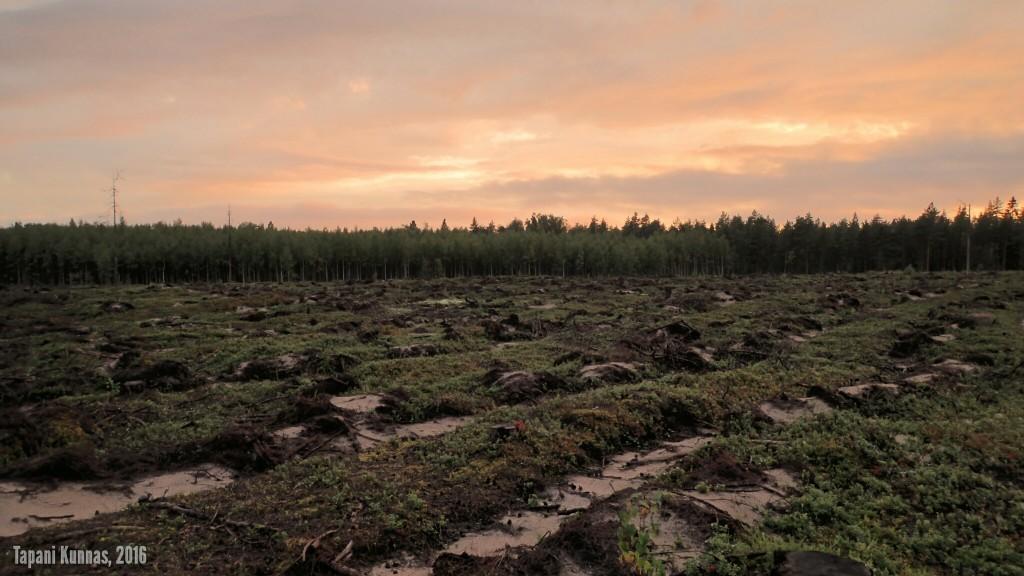 Aurattu hakkuualue ei ole mikään silmänilo, mutta kai tällaiselle toiminnalle jokin metsänhoidollinen peruste on.