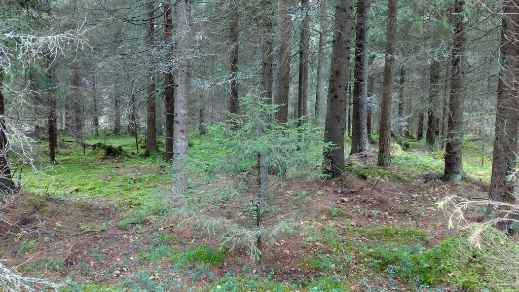 Kivannäköistä metsää, johon tekisi mieli jäädä vetelehtimään. Mutta se matka siten edisty.