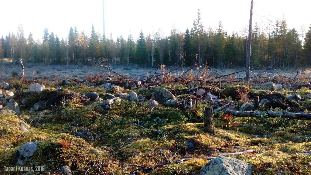 Pakkasyön jälkeen maanpinta on varjoisissa paikoissa kuurassa.