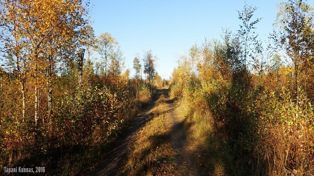Alkumatkan metsätien aurinkoista tunnelmaa.
