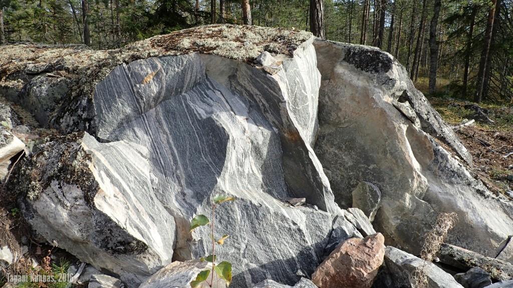 Hieno kivi.