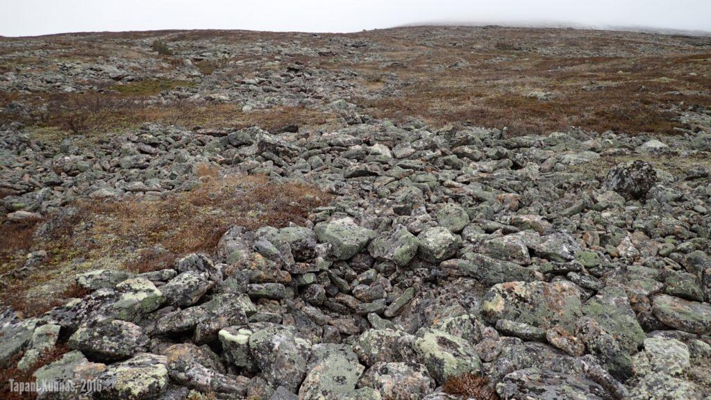 Tunturiin on helppo kiivetä, vaikka nousu onkin jyrkkä. Pahimmat kivikot ovat kierrettävissä.