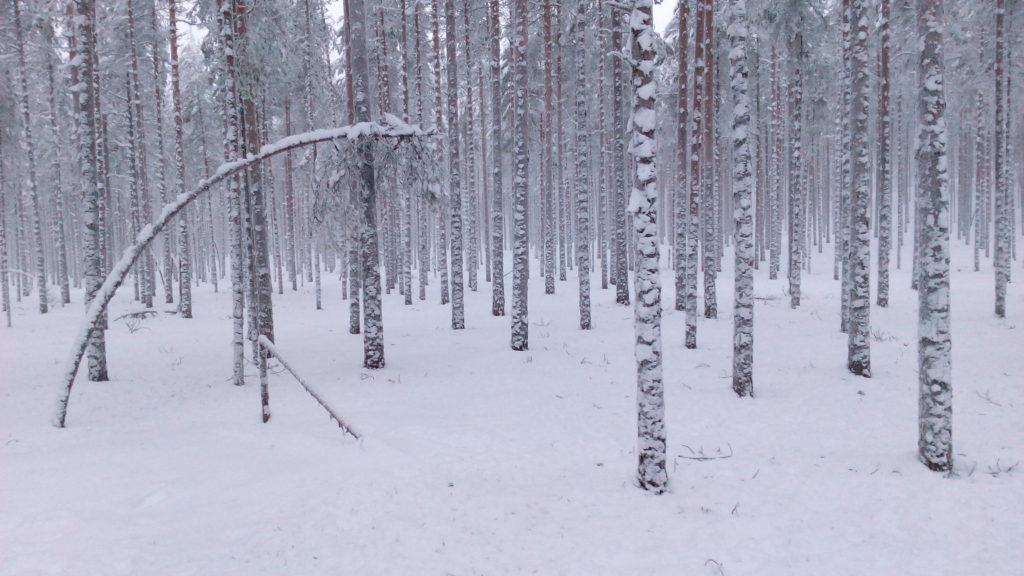 Tällaisessa paikassa on suuri vaara, että ei näe metsää puilta.