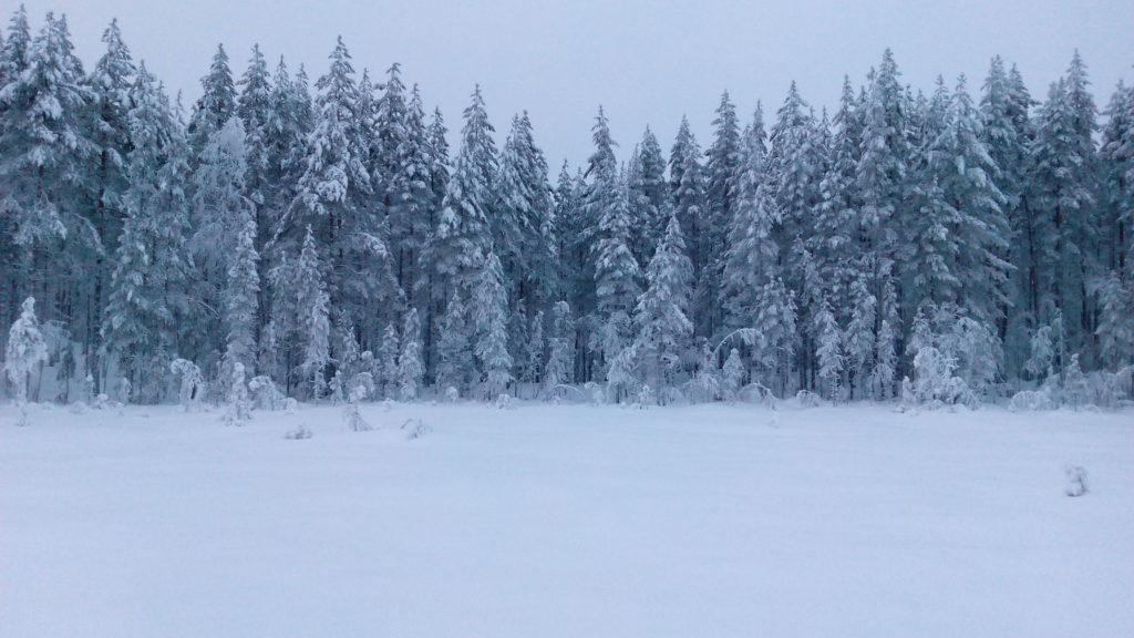 Ensimmäisen suon jälkeen tuleva kapea metsäkannas.