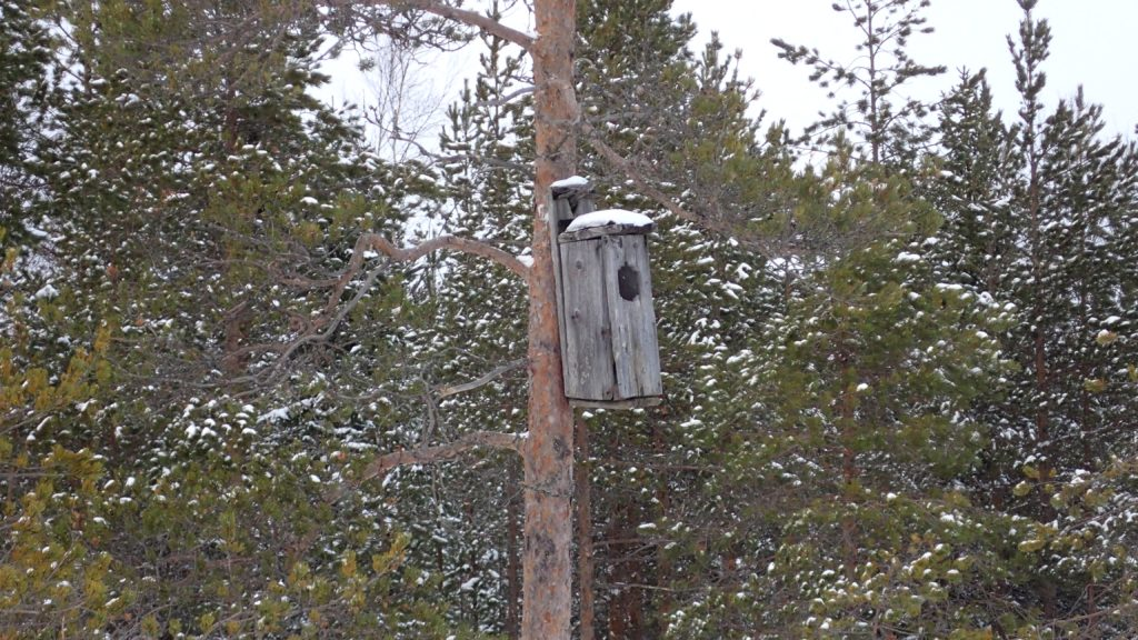 Ison linnun pönttö puussa.