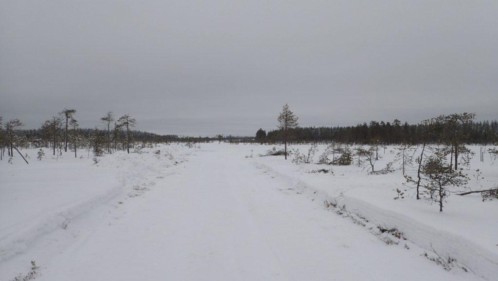 Puutavaraliikenteelle aurattu tie suolla.