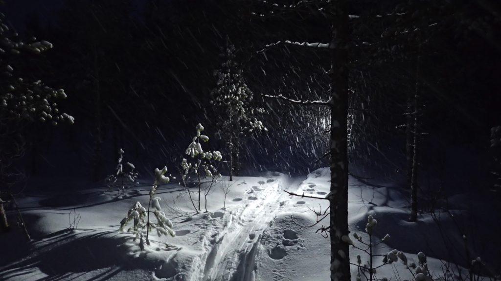 Lumisade pimeässä metsässä.